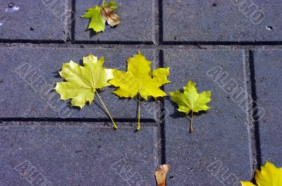 Paved sidewalk with autumn foliage.