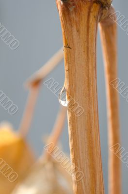 one drop on the branch