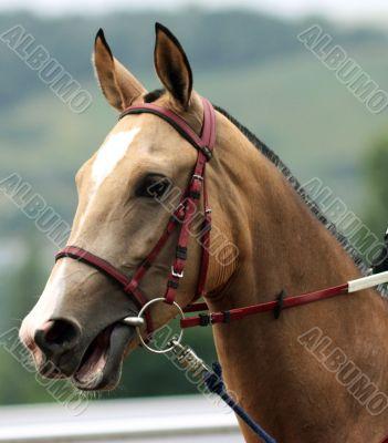 Profile of a beautiful  horse.