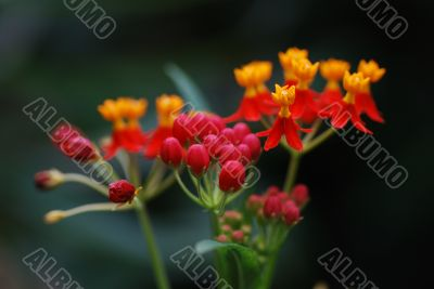 orange red flower from rain forest