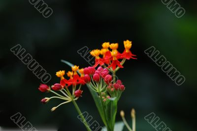flower of the rain forest