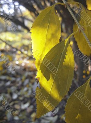 Green and yellow leaves on the autumn tree