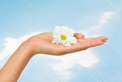 beautiful female hand with flower