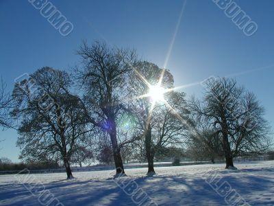 Christmas Snow and Sun