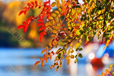 Leaves on tree with  beautifuliy  blurred background