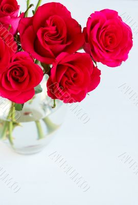 Bunch of pink roses in a vase