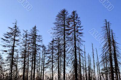 Wald am Fuße des Brocken