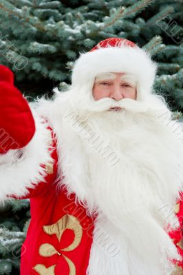 Portrait of natural Santa Claus standing at Christmas Tree outdo