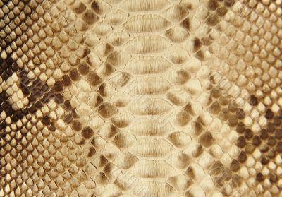 Portrait of snake skin.