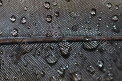 water drops closeup on feather