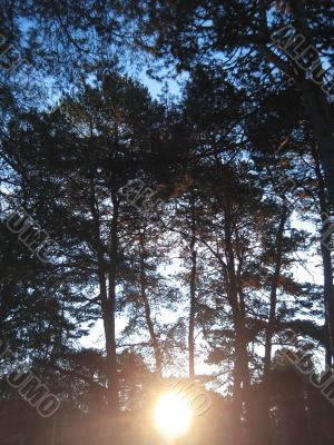 Sunrise in the winter forest. Caucaus nature