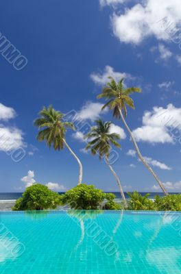 Three palm trees against a blue sky and ocean background