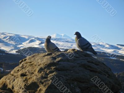 Doves on the stone and snowy mountain background
