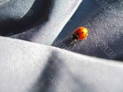 Ladybug walking on the jeans. Summertime outdoor