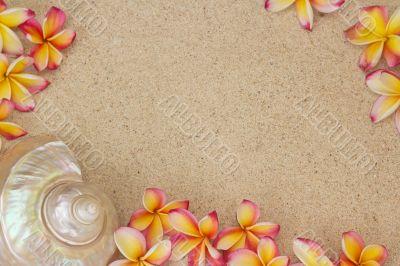 Frangipani flower and a large sea shell on sand