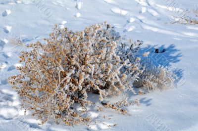 Dry Bush and Footprints On Snow