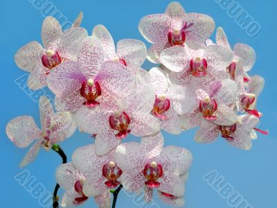 branch of purple and white orchid