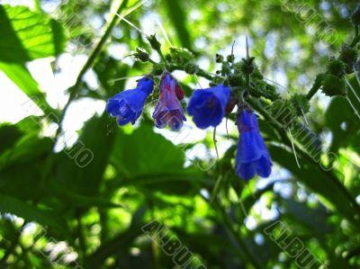 Blue flowers blooming in the meadow summertime