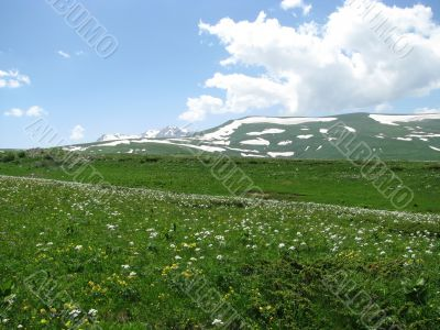 the Alpine meadows