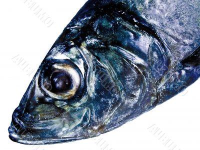 decorative fish head