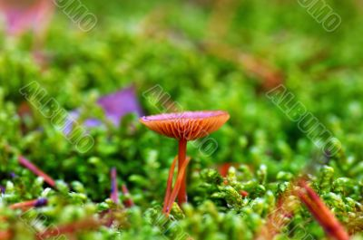 mushroom growing in the forest