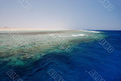 huge coral reef