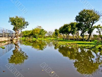 The marsh land