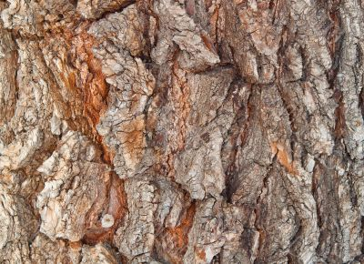 bark of a tree structure