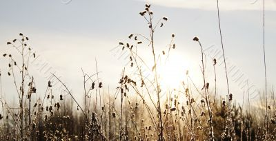 The frozen grass