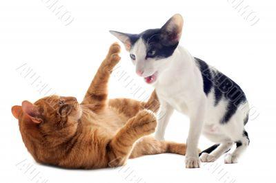 biting cats