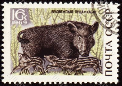 Wild boar on post stamp