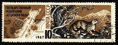 Cedar Pad reserve in USSR on post stamp