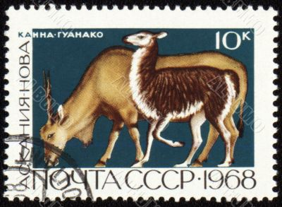 Antelope on post stamp