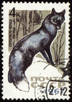Black fox on post stamp