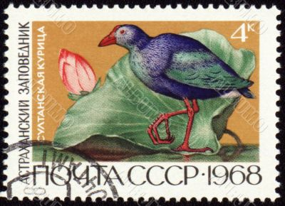 Sultan hen on post stamp