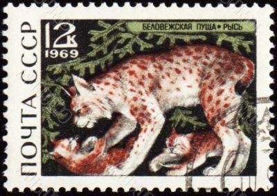 Lynx on post stamp