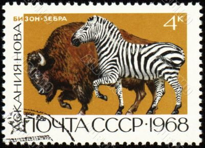 Zebra and bison on post stamp