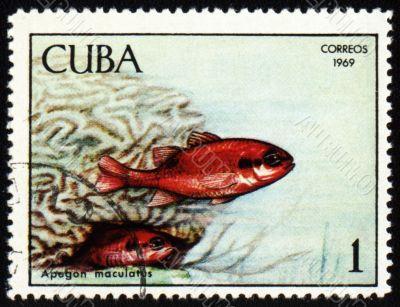 Fish Apogon maculatus on post stamp
