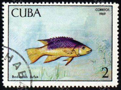 Fish Bodianus rufus on post stamp