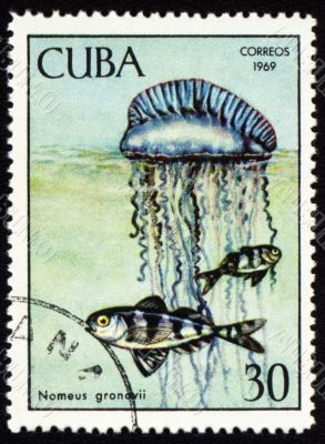 Fish Nomeus gronovii on post stamp