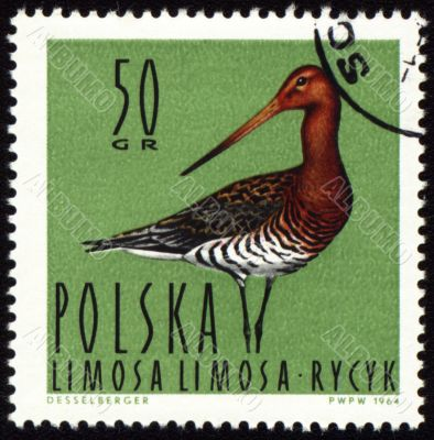 Black-tailed Godwit on post stamp