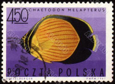 Black-eye butterflyfish (Chaetodon melapterus) on post stamp