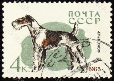 Fox terrier on post stamp