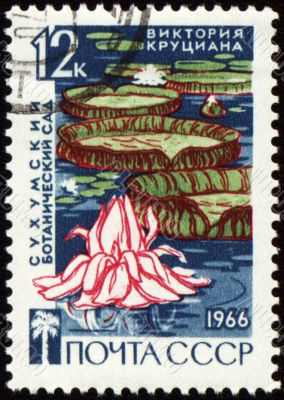 Waterlily in botanical garden on post stamp