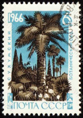 Palm trees in botanical gardens on post stamp