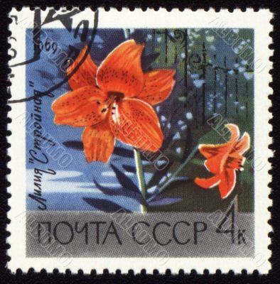 Orange lily on post stamp