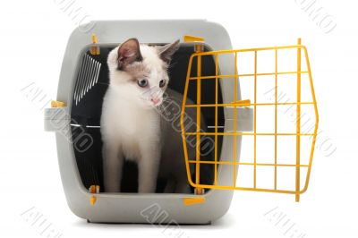 kitten in pet carrier