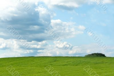Green herb on background sky
