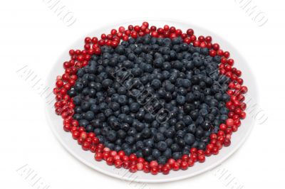 Berries of the whortleberry and cowberries
