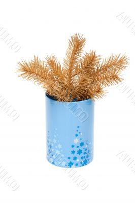 Golden branch fir tree